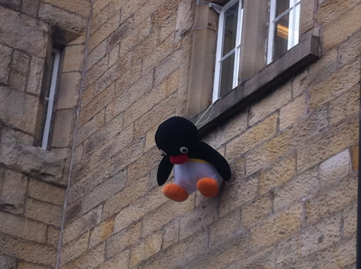 Pingu hanging from the window